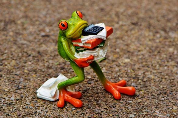 student unpaid internship frog-1339892_1920