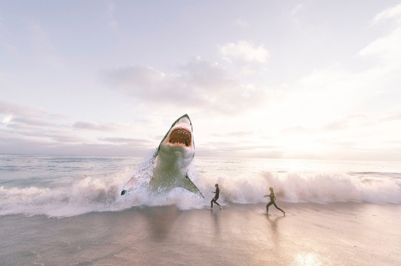 Shark california independent contractor misclassification