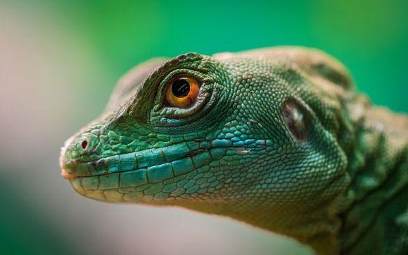 Independent contractor part-time worker lizard