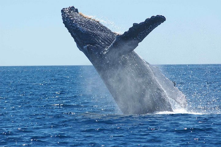 Whale summer internships paid unpaid employee independent contractor